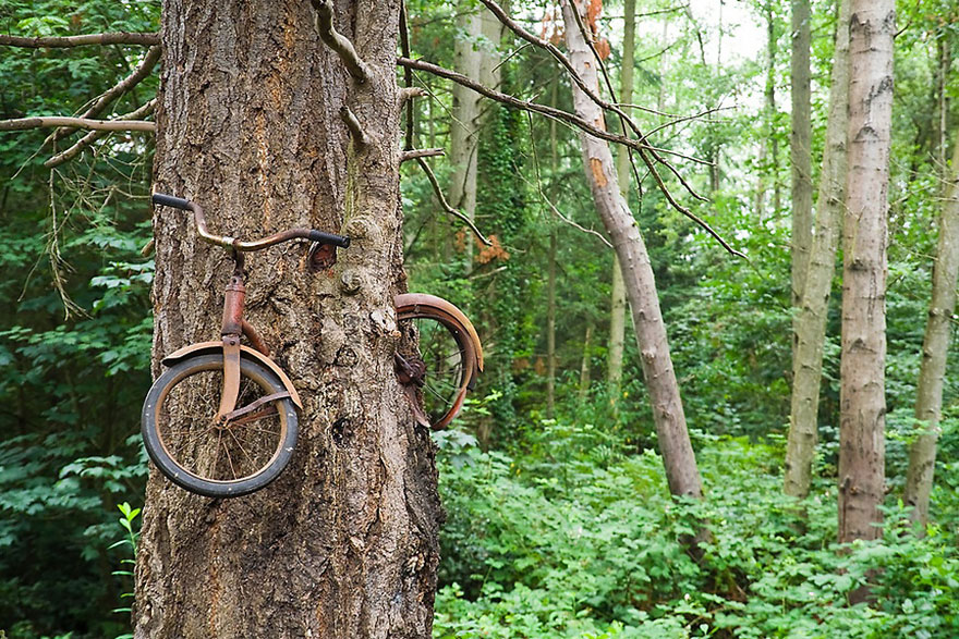 naturaleza-recupera-lugares-abandonados-12