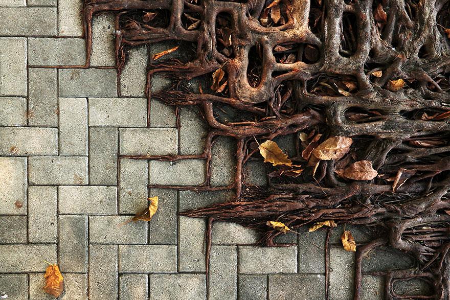 naturaleza-recupera-lugares-abandonados-3