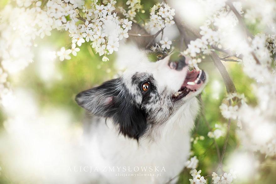 retratos-perros-zmyslowska- (12)