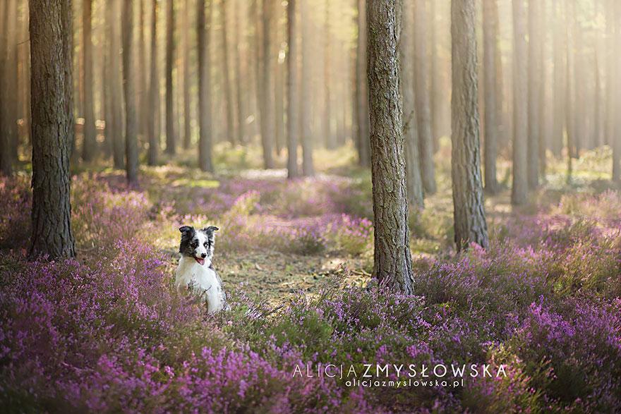 retratos-perros-zmyslowska- (18)