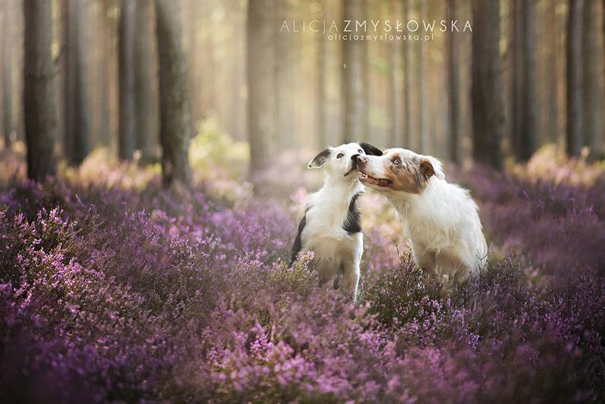 retratos-perros-zmyslowska- (19)