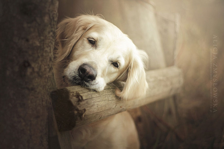 retratos-perros-zmyslowska- (6)