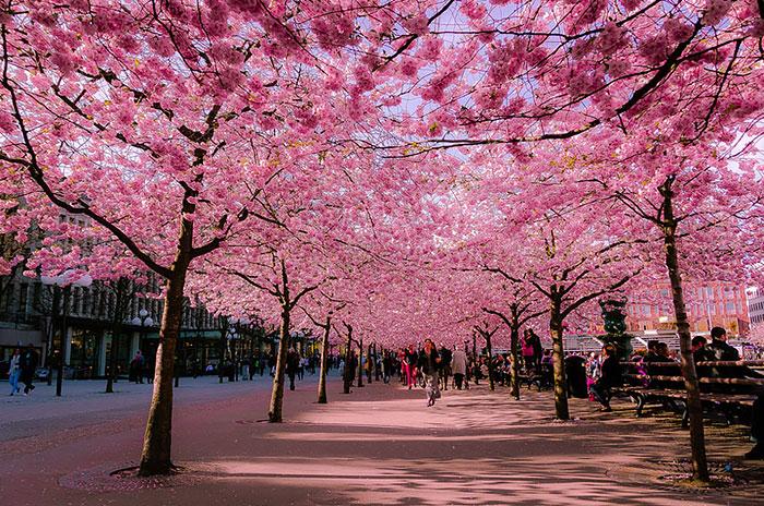 calles-arboles-flores (1)