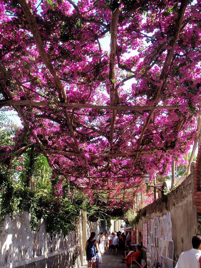 calles-arboles-flores (12)