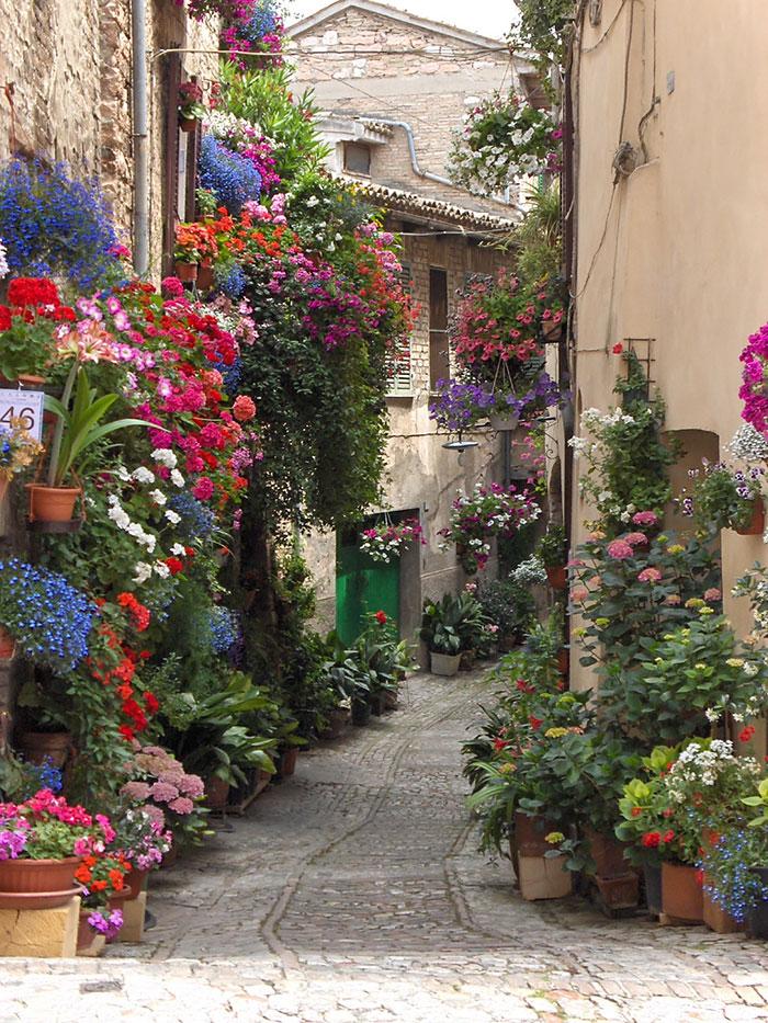 calles-arboles-flores (14)