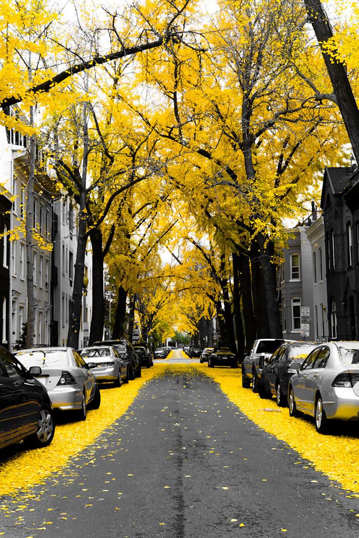 calles-arboles-flores (15)