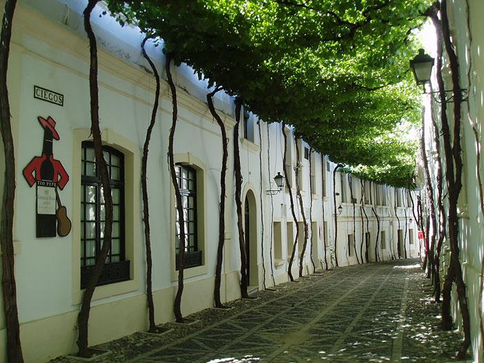 calles-arboles-flores (3)
