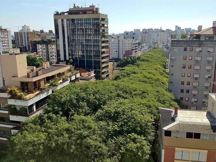 calles-arboles-flores (5)