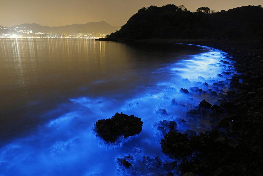 bioluminiscent