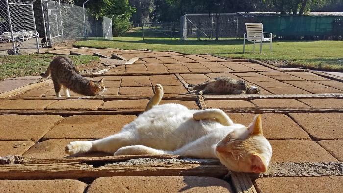 Cada semana hago fotos en el mayor santuario de gatos de California (con más de 700 gatos)