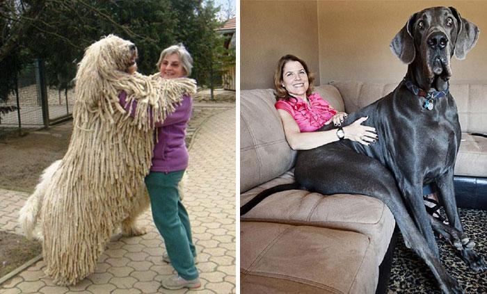 12 Perros Que No Se Dan Cuenta De Lo Grandes Que Son