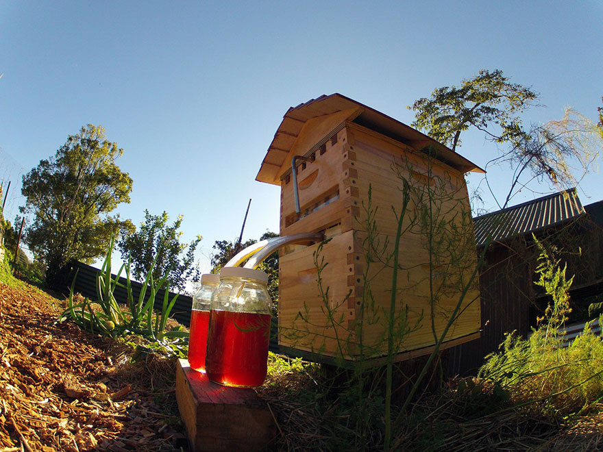 nueva-colmena-apicultura-miel-grifo-stuart-cedar-anderson (7)