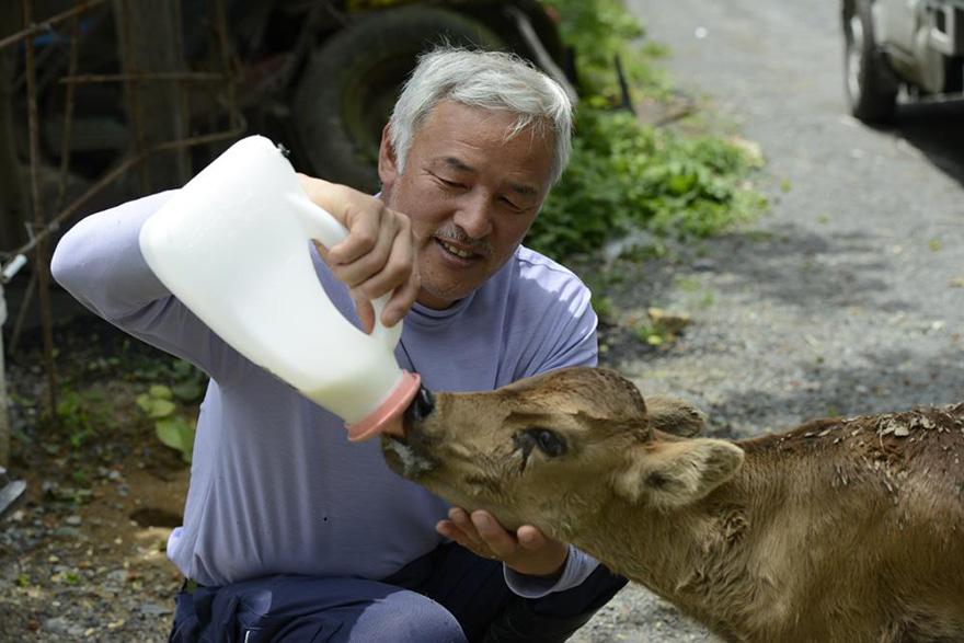 Qué hacer ante un caso de maltrato animal Guardian-fukushima-abandoned-animals-naoto-matsumura-1