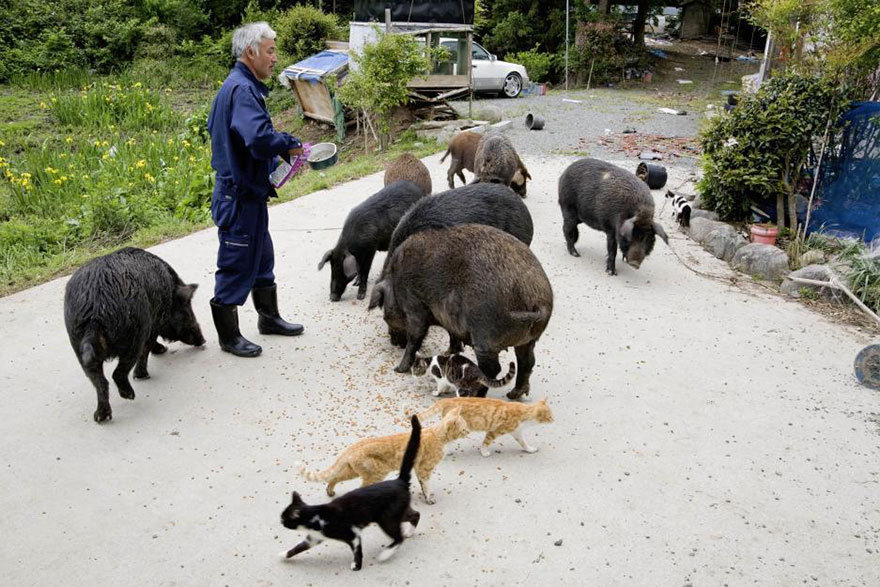 Qué hacer ante un caso de maltrato animal Guardian-fukushima-abandoned-animals-naoto-matsumura-10