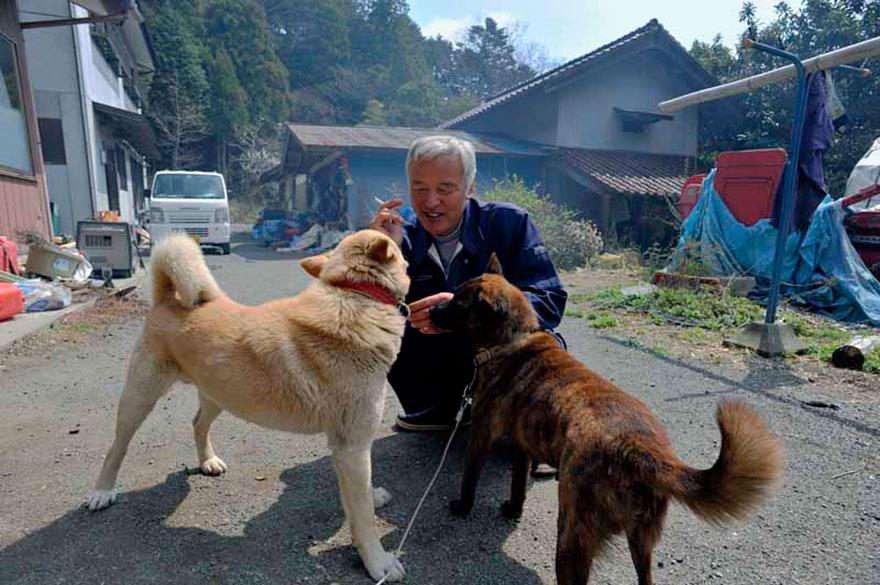 Qué hacer ante un caso de maltrato animal Guardian-fukushima-abandoned-animals-naoto-matsumura-12