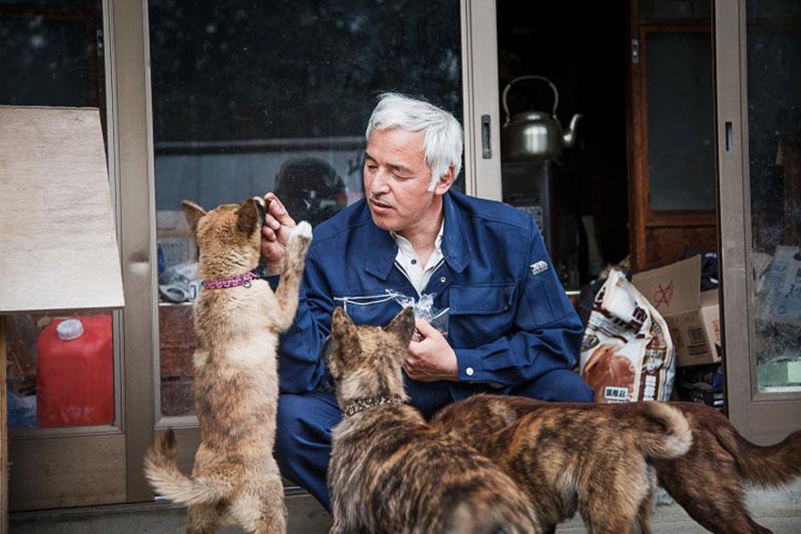 Qué hacer ante un caso de maltrato animal Guardian-fukushima-abandoned-animals-naoto-matsumura-15