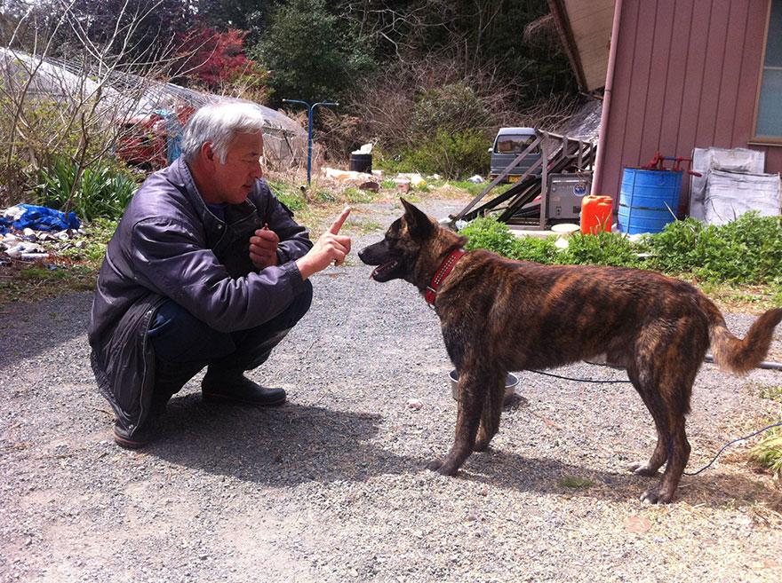 Qué hacer ante un caso de maltrato animal Guardian-fukushima-abandoned-animals-naoto-matsumura-6