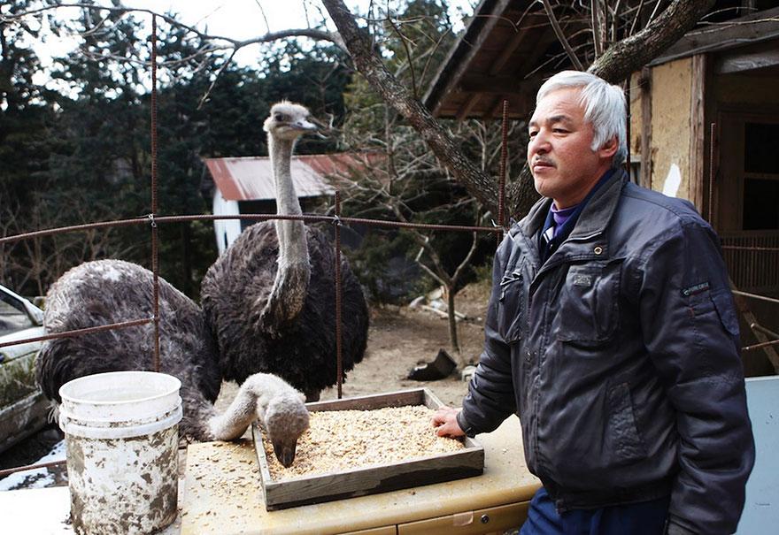 Qué hacer ante un caso de maltrato animal Guardian-fukushima-abandoned-animals-naoto-matsumura-7