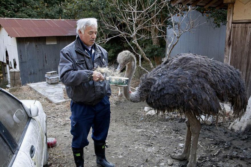 Qué hacer ante un caso de maltrato animal Guardian-fukushima-abandoned-animals-naoto-matsumura-8