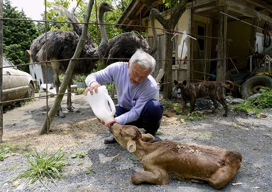 Qué hacer ante un caso de maltrato animal Guardian-fukushima-abandoned-animals-naoto-matsumura-9