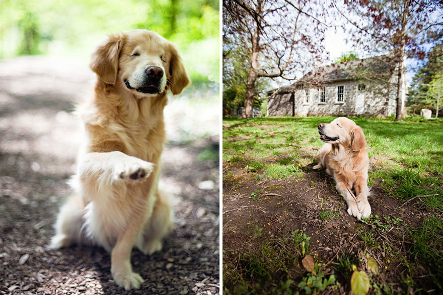 perro-ciego-terapia-smiley-stacey-morrison (1)