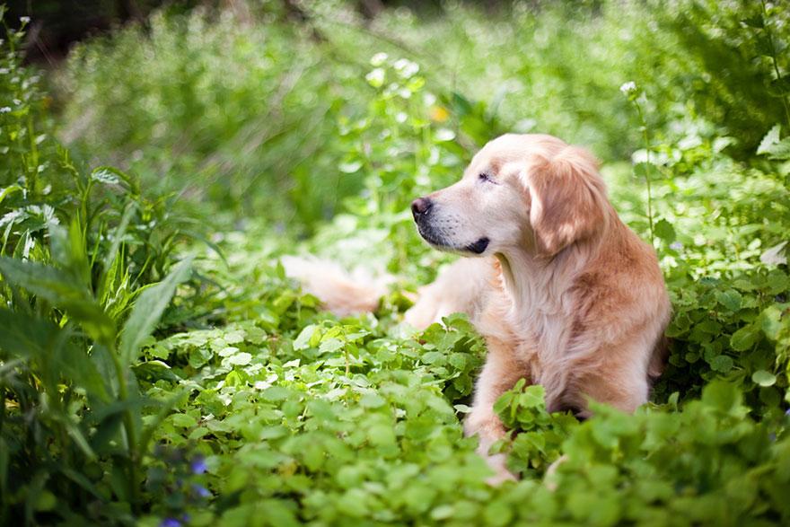 perro-ciego-terapia-smiley-stacey-morrison (10)
