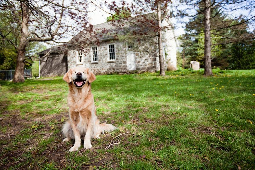 perro-ciego-terapia-smiley-stacey-morrison (7)