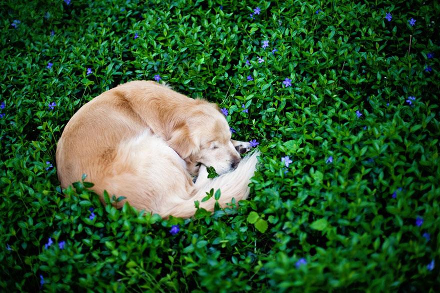 perro-ciego-terapia-smiley-stacey-morrison (8)