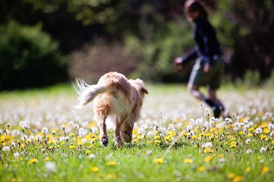 perro-ciego-terapia-smiley-stacey-morrison (9)