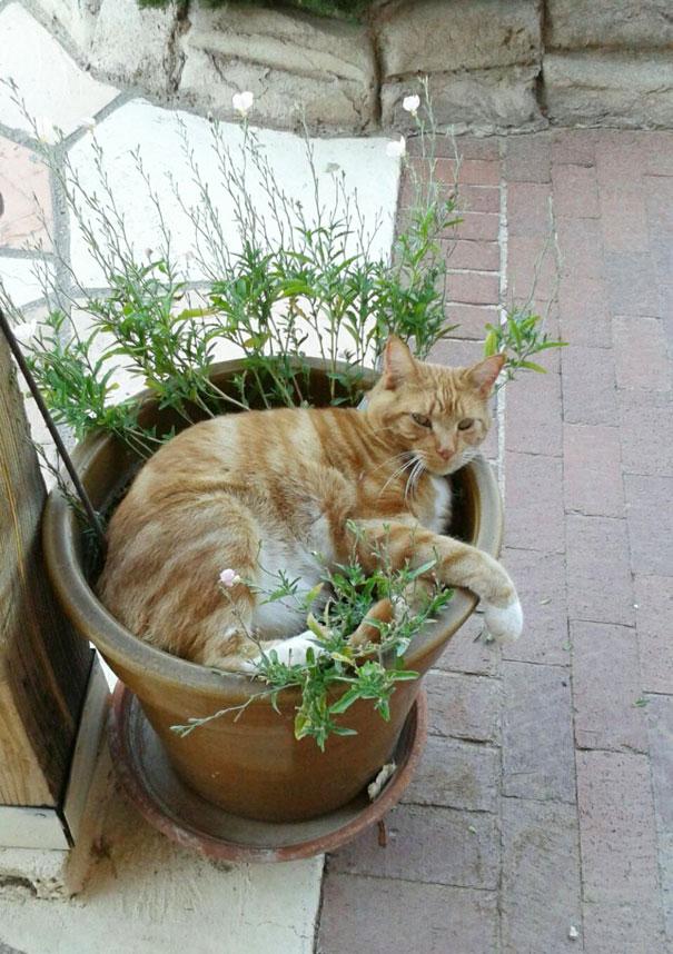 25 gatos-plantas que probablemente no deberías regar | Bored Panda