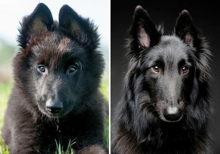 antes-despues-perros-creciendo-4.jpg