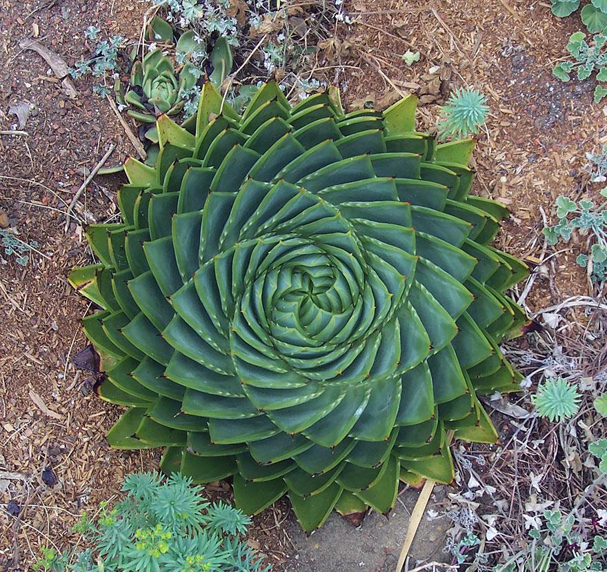 plantas-geometricas (10)