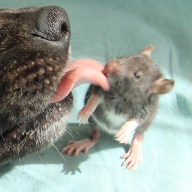 amistad-animal-riff-rata-osiris-perro (1)