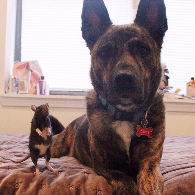 amistad-animal-riff-rata-osiris-perro (9)
