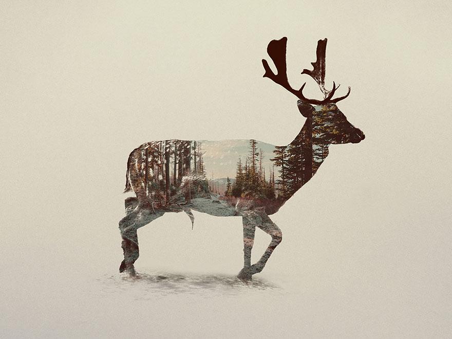 fotos-doble-exposicion-animales-andreas-lie-noruega (15)