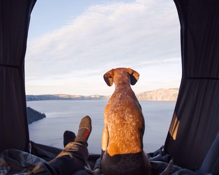 perro-maddie-viajes-moto-theron-humphrey (20)