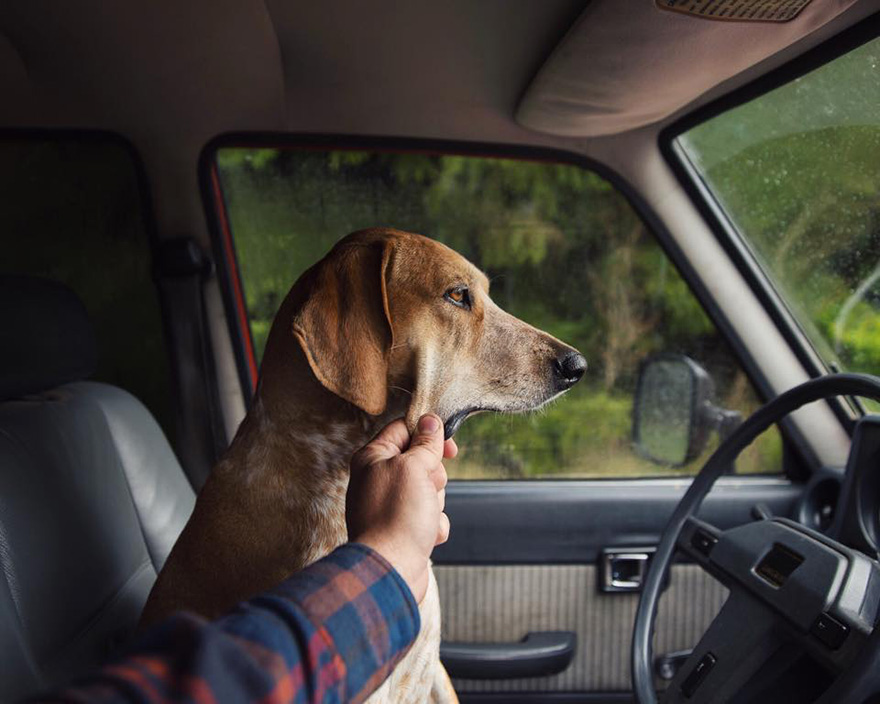 perro-maddie-viajes-moto-theron-humphrey (4)