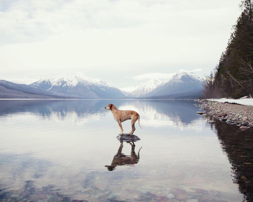 perro-maddie-viajes-moto-theron-humphrey (7)
