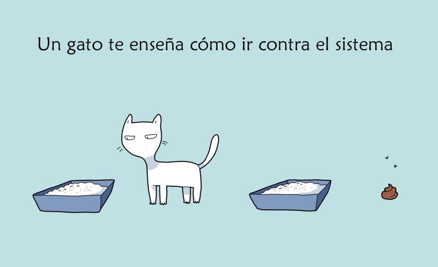 beneficios-tener-gato4