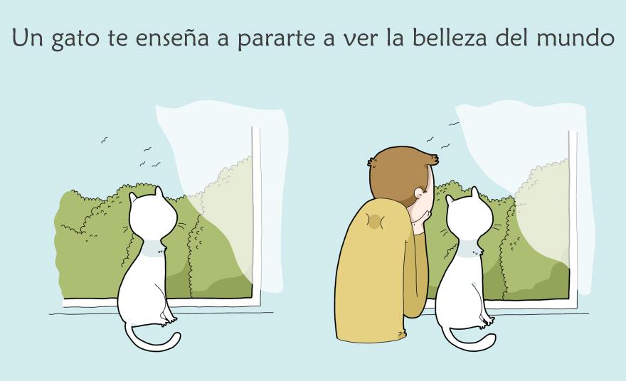 beneficios-tener-gato5