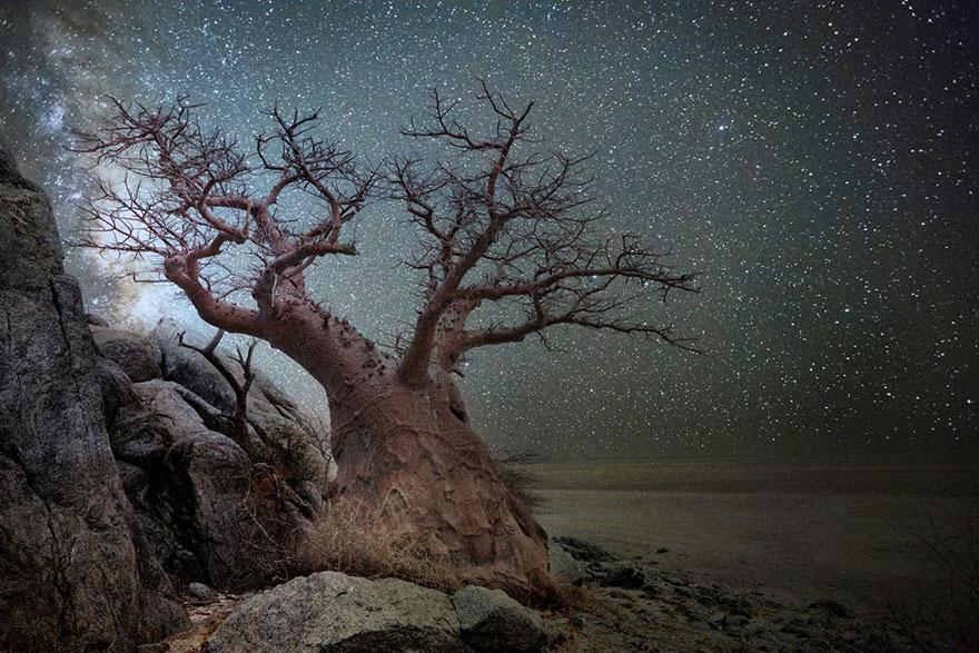 fotos-arboles-viejos-noche-estrellas-beth-moon (6)
