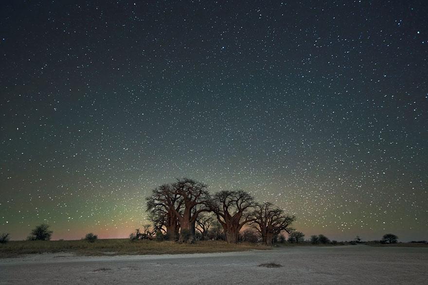 fotos-arboles-viejos-noche-estrellas-beth-moon (8)