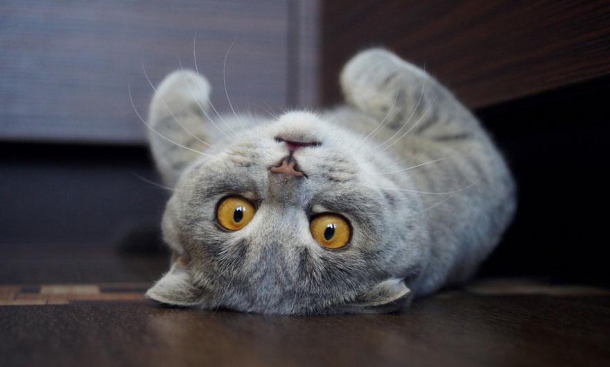 gato-lengua-fuera-melissa-alina-esther (1)
