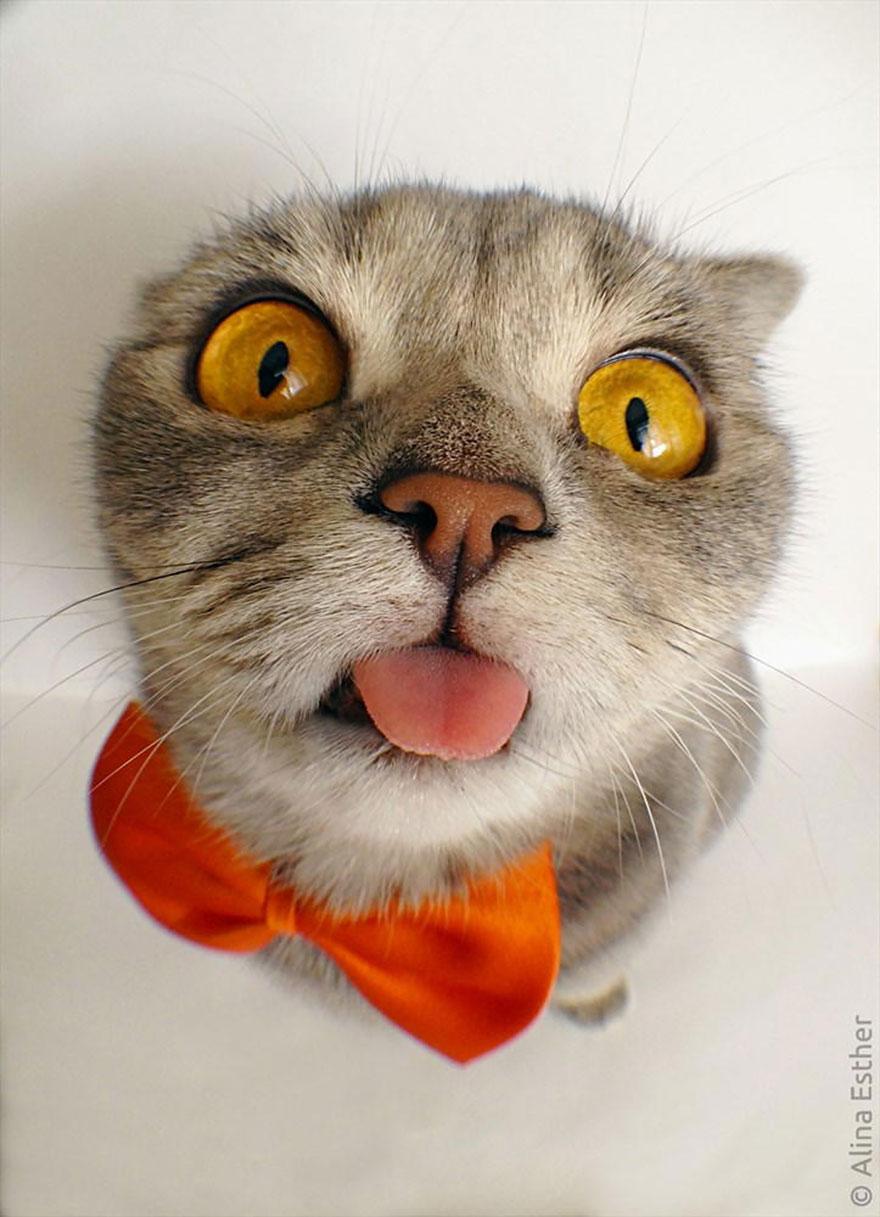 gato-lengua-fuera-melissa-alina-esther (6)