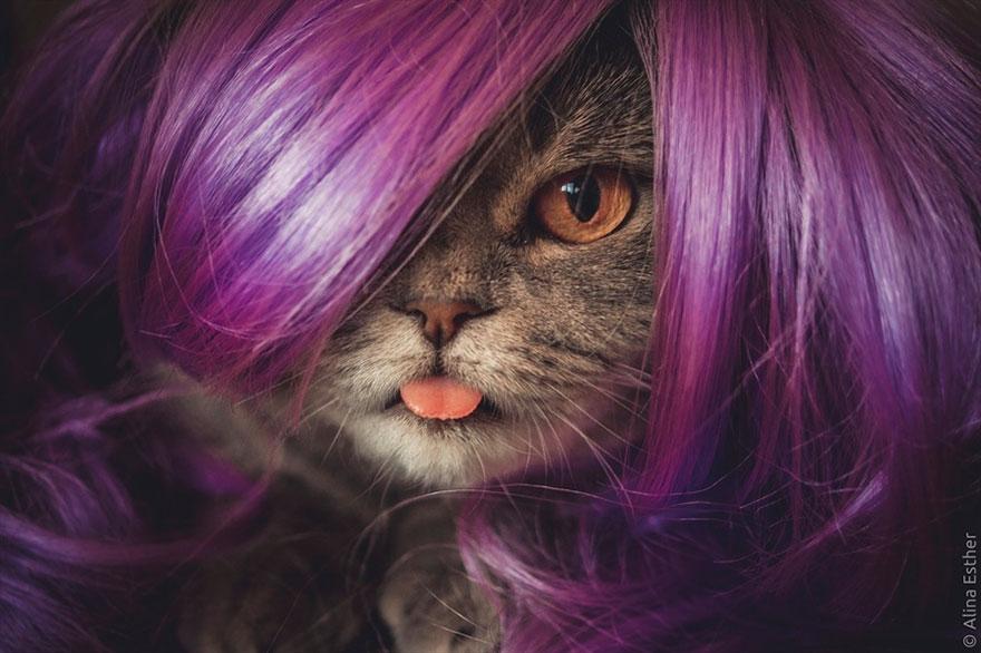 gato-lengua-fuera-melissa-alina-esther (8)