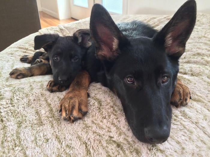 fotos-padres-perros-cachorros (11)