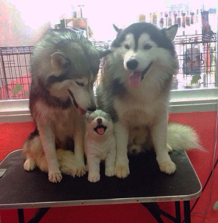 fotos-padres-perros-cachorros (2)