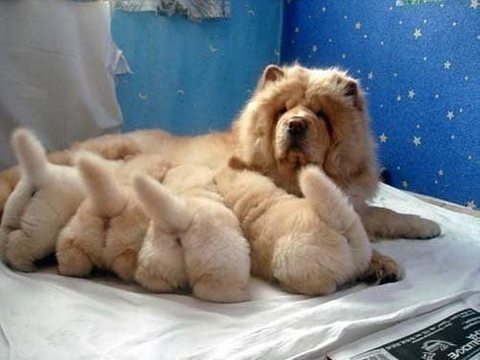 fotos-padres-perros-cachorros (22)