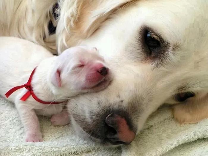 fotos-padres-perros-cachorros (24)