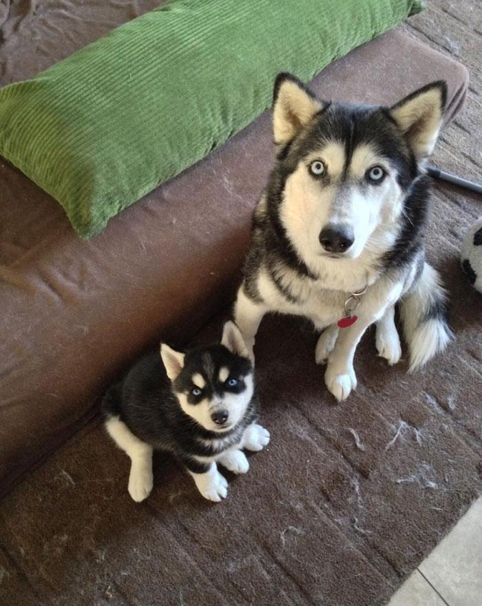 fotos-padres-perros-cachorros (9)